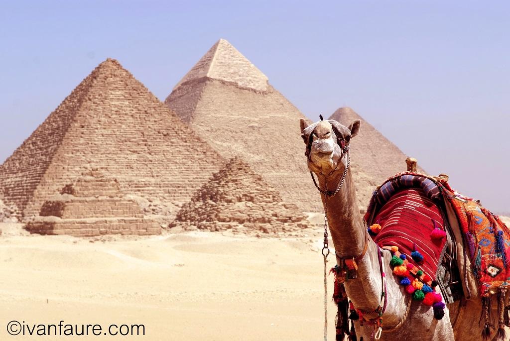 camello pirámide egipto