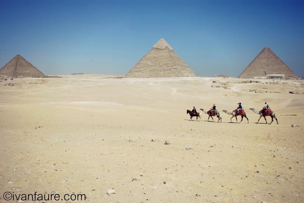 camellos en pirámides
