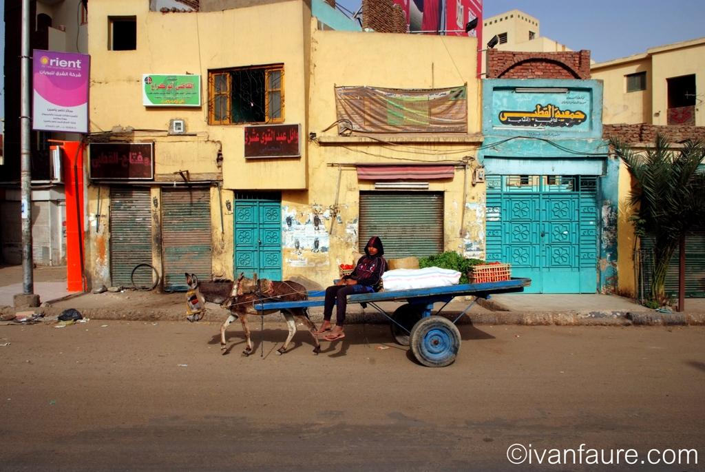 burro en calle aswan