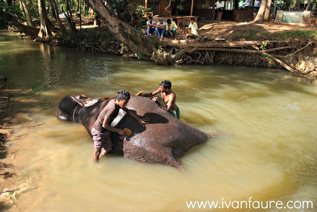 baño elefante en sri lanka