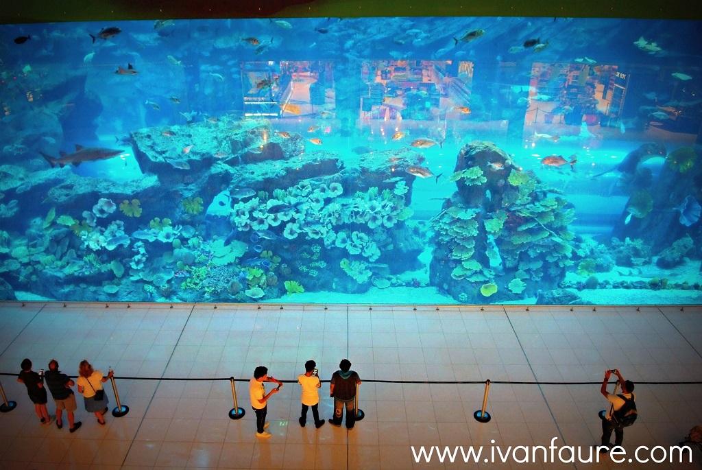 acuario dentro centro comercial dubai